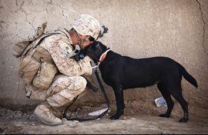 Best Military Dogs